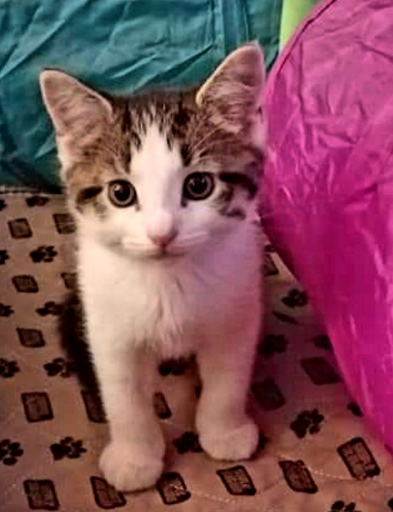 Cat & Small Animal Care