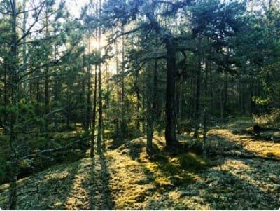 Skydda din skog mot ersättning