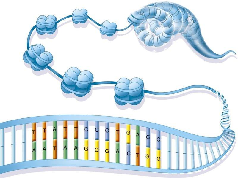 Misregulation of chromatin structure in disease