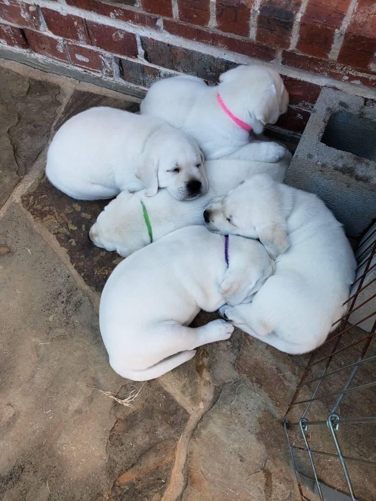 Puppy Price