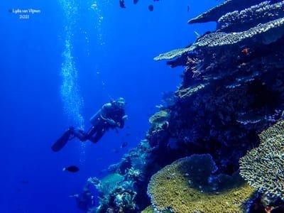 5-Days Fun Diving Komodo National Park & Rinca Dragon Tour