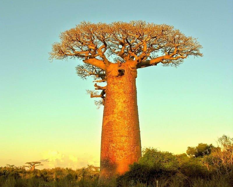 La Tsiribihina
