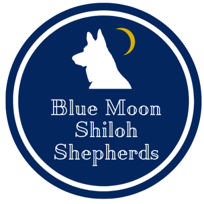 Blue Moon Shiloh Shepherds