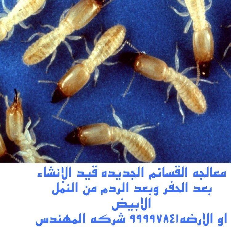 معالجة النمل الأبيض
