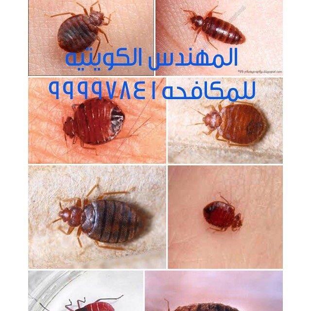 معالجة بق الفراش بأفضل المبيدات الصاعقة