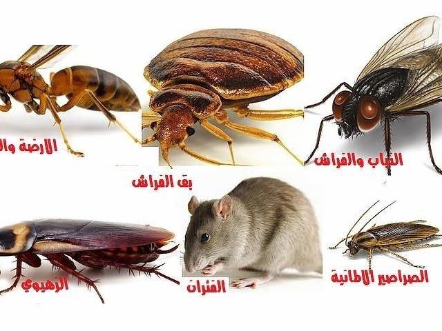 مكافحة حشرات وقورض الكويت المهندس