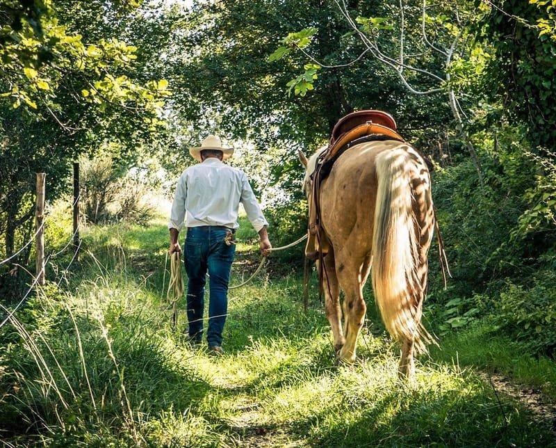 Natural Horsemanship - Maneggio & Trekking