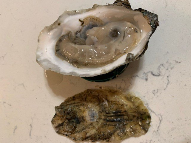 Raw Oysters in the Shell