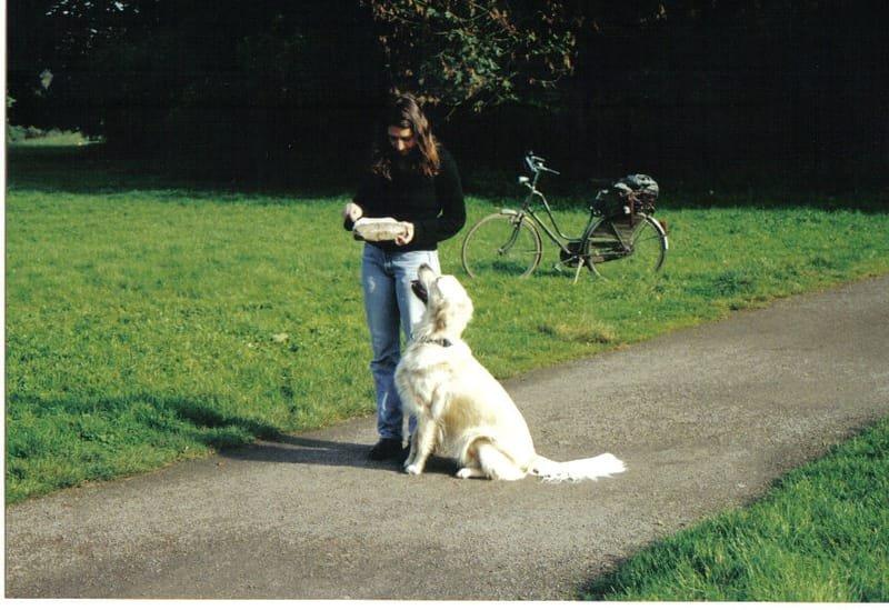 חינוך כלבים וגורים - גישה חדשה