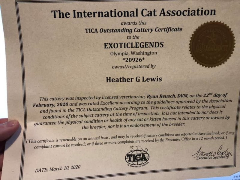 2020 - 2021 TICA Outstanding Cattery