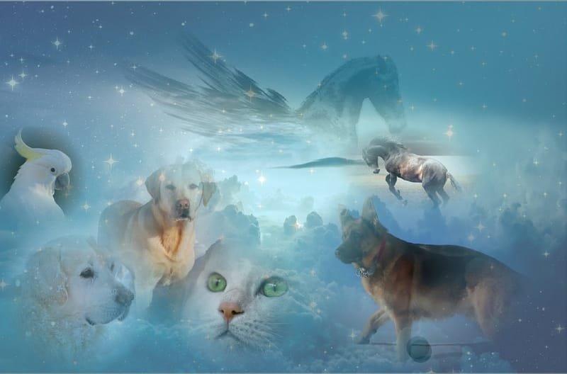 ChiroTrance Hypnose® für Tiere