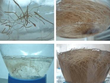 Bio-Bogan The ibogaine bioreactor