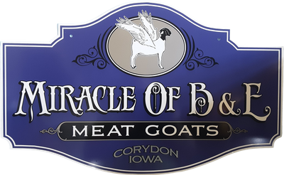 Miracle Of B & E Meat Goats