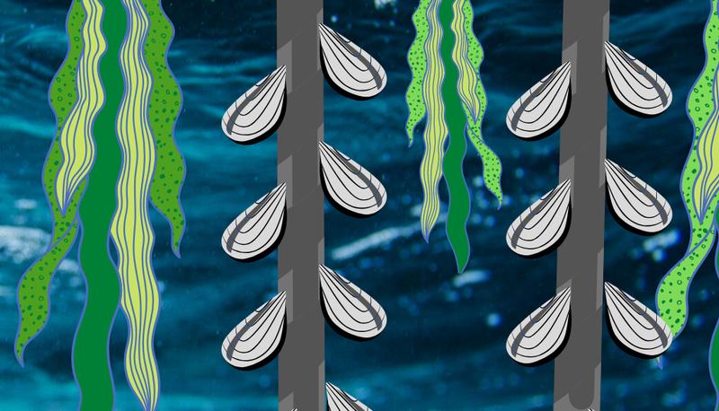 Polyculture (Integrated Multi-Trophic Aquaculture)