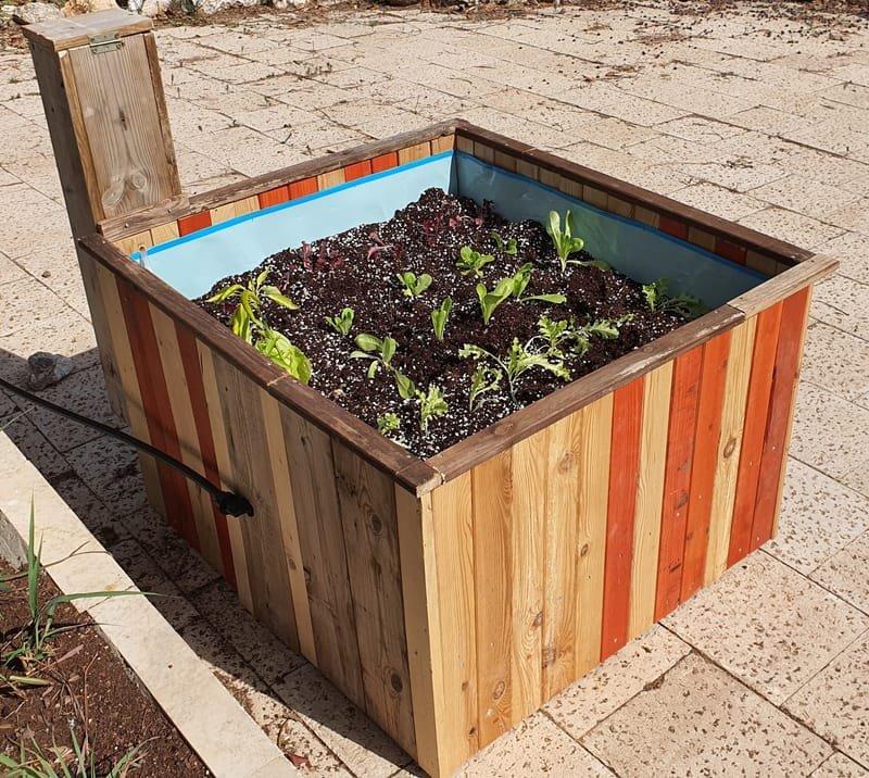 גידול ירקות בבית בשיטה הידרופונית