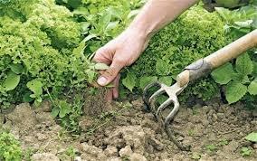 Landscape Rehabilitation & Maintenance