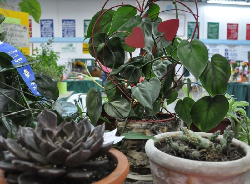 Section C - Potted Plants