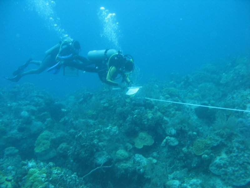 Coral reef ecology