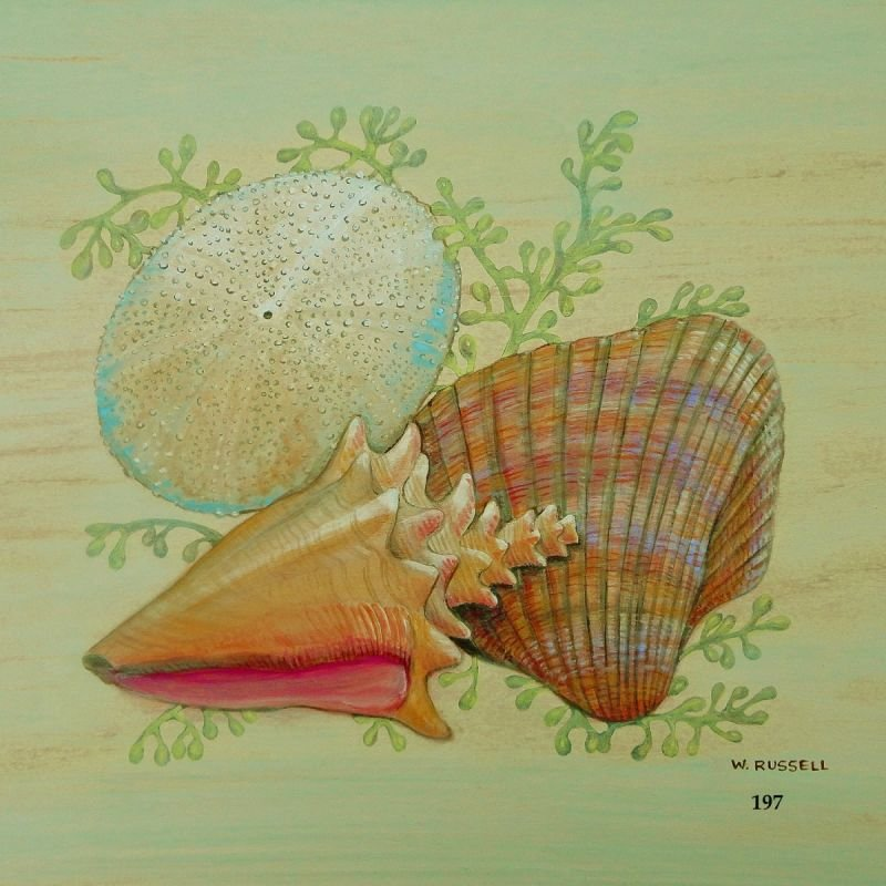 Seashell Trios Series with Conch Shell with ocean plant life.