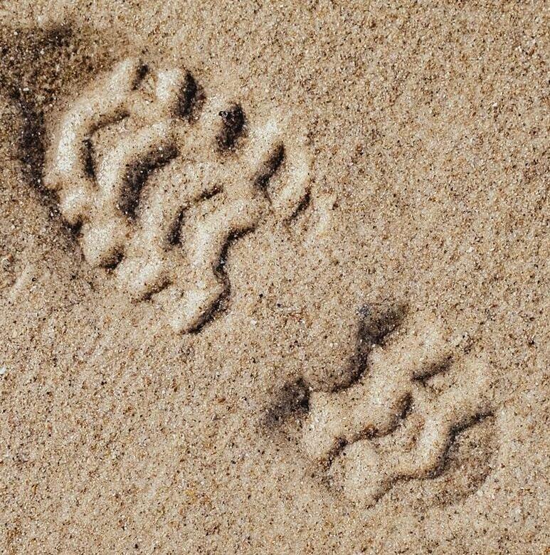 טביעת הרגל האקולוגית שלנו