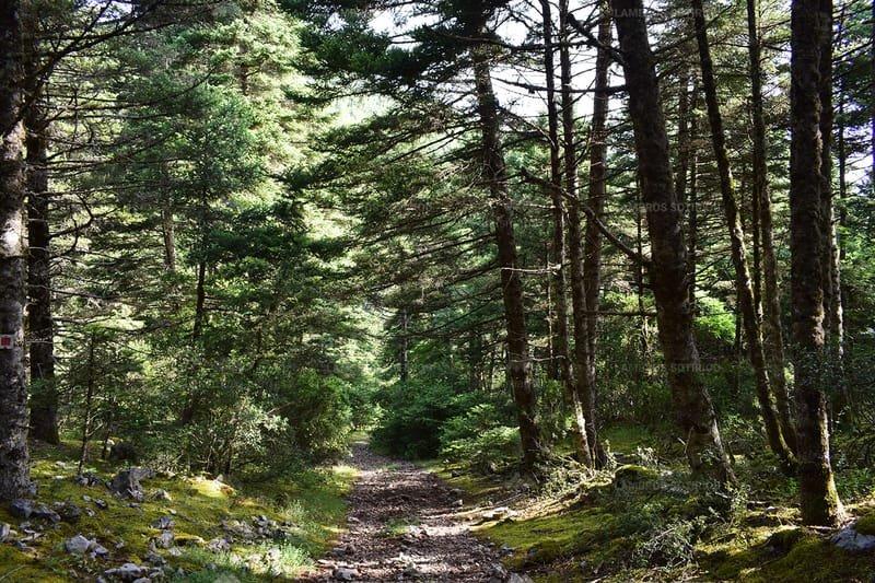 The Menalon Trail