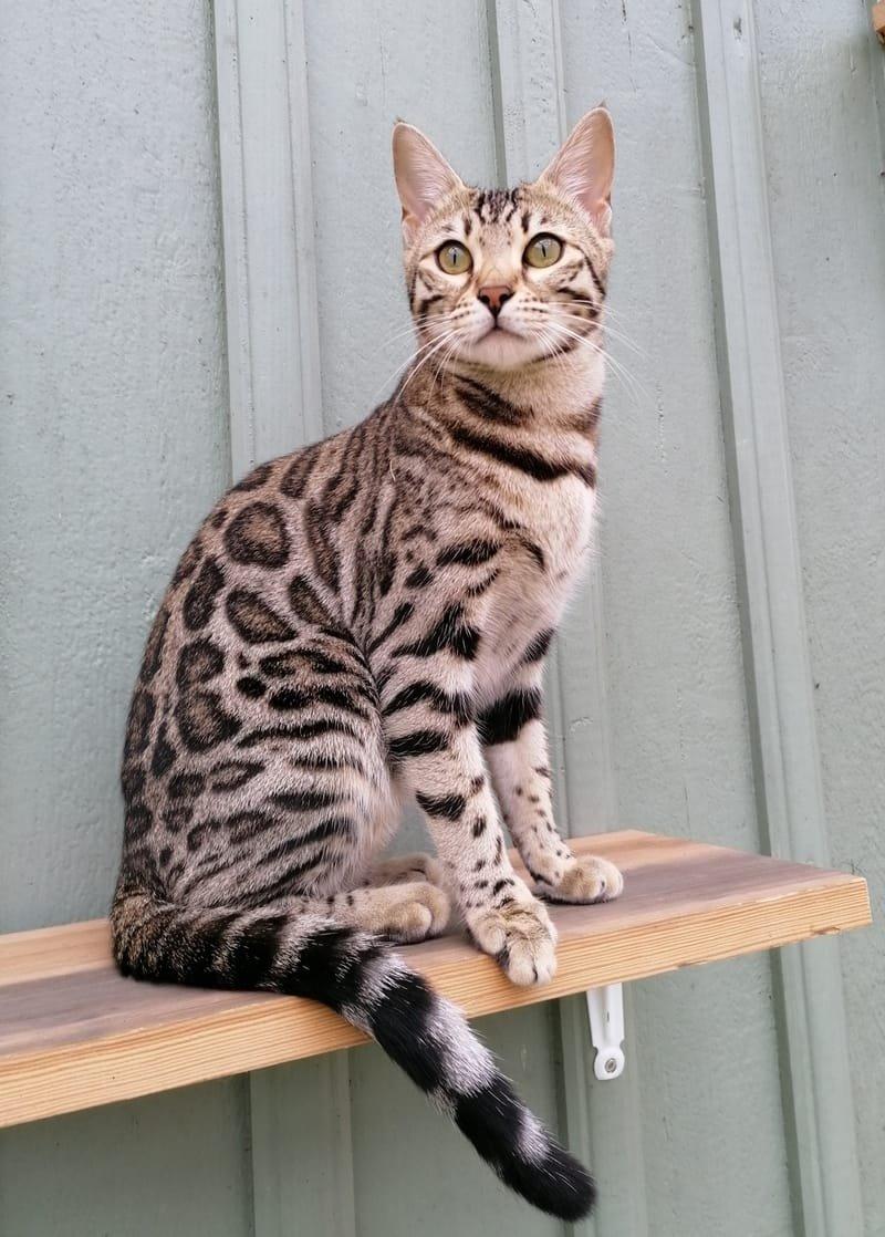 Leopardettes Elzie