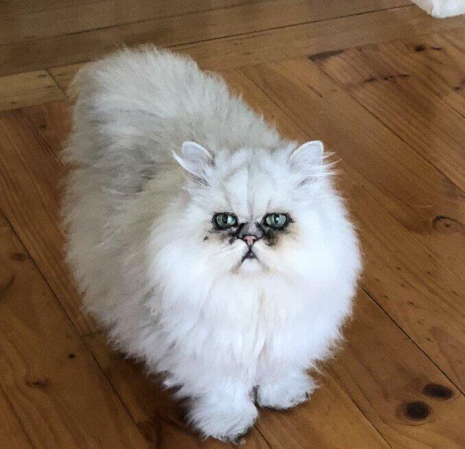 Cat Behaviour Consults