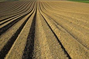 קנית קרקע בארץ ישראל