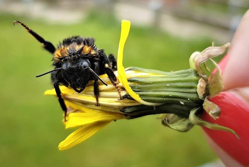 Bee-friendly City comes to Woolsington Parish