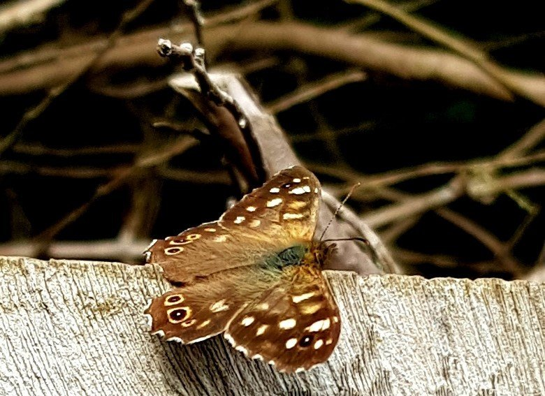 Building better sites for Butterflies