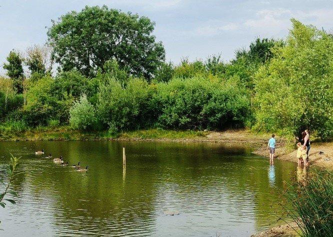 Parish Ponds Restoration: Phase I Removal of Water Soldier Vegetation