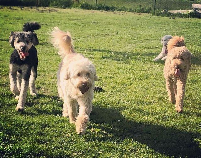 Puppy Behaviour and Training