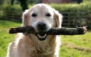 Doggie Day Care in Berkley MA