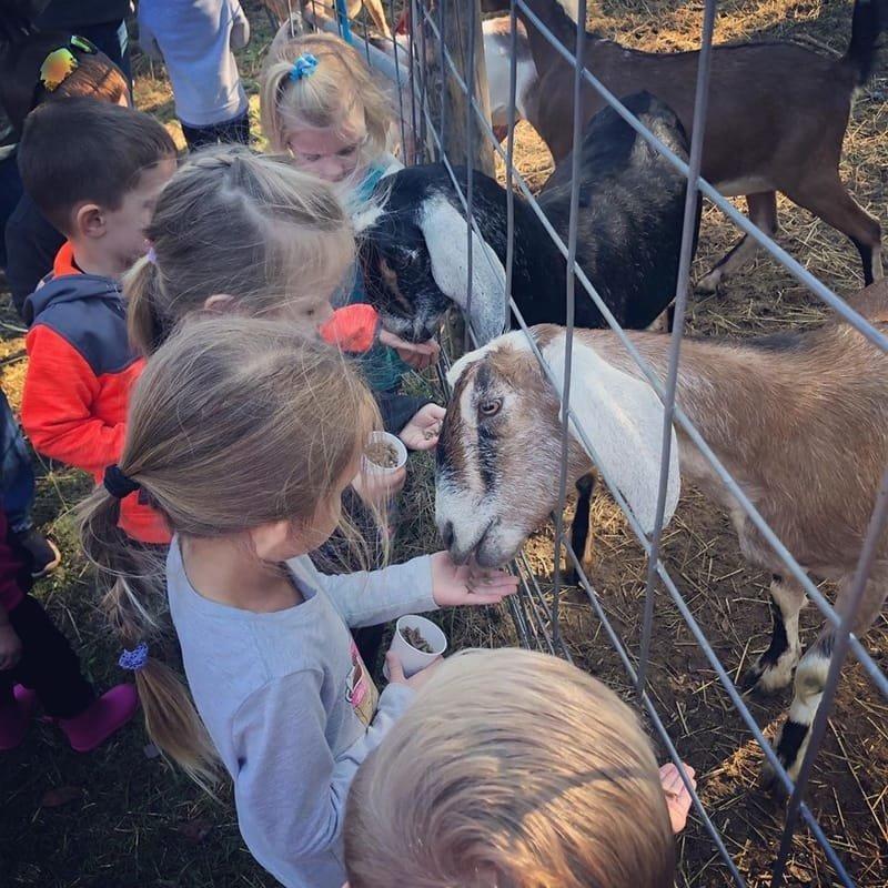 Birthday Parties at Midland Farms