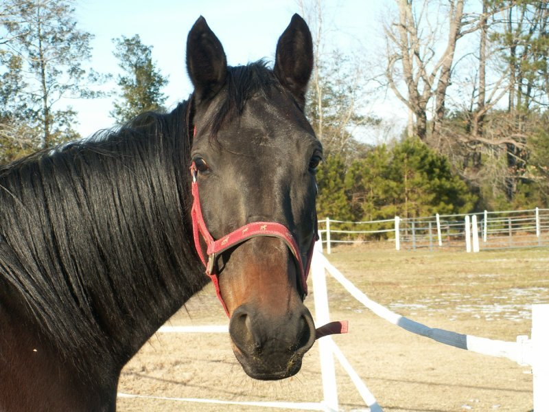 Networking to help find homes/options for displaced equines.