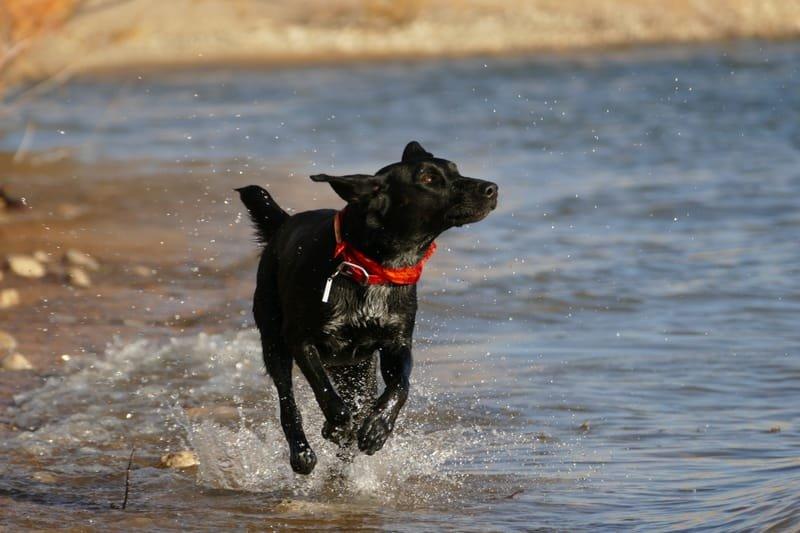 The Incredible Dog Program